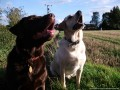 Dog Walking, Home from Home Pet and Dog Boarding, Pet and Cat Visiting, Pet 'Bark and Ride' Taxi
