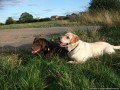 Booker Pet Care, Wetherby, West Yorkshire, Dog Walking, Home from Home Pet and Dog Boarding